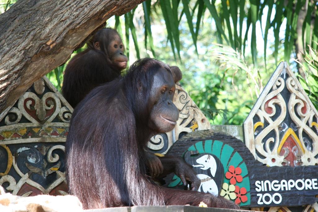 Zoo Mamy 023