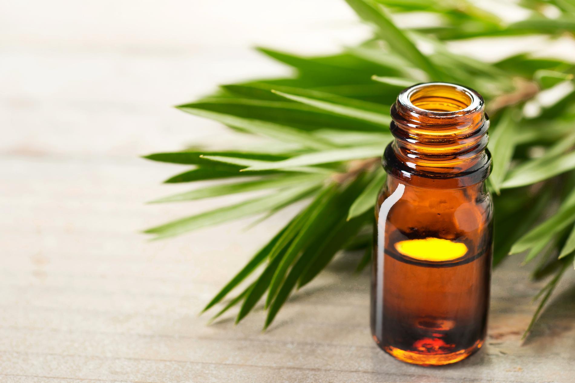 les bienfaits des huiles essentielles d 39 arbre th et de. Black Bedroom Furniture Sets. Home Design Ideas